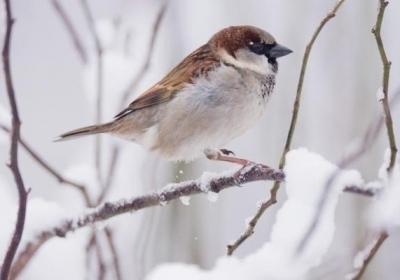 tiere-naturlich-gesund-auch-im-winter